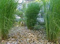 steingarten gräser winterhart gr 228 ser garten garten landschaftsbau und steingarten