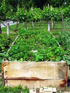 hochbeet bepflanzen 187 obst gem 252 se blumen und mehr