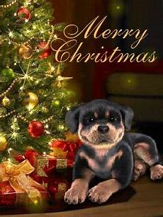 merry christmas sleepy puppy pictures photos and images for facebook pinterest and