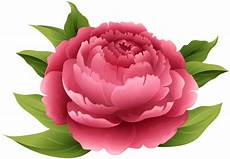 peony clipart peony png clip image gallery yopriceville high