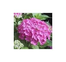 fiore della rinascita fiori significato e simbologia
