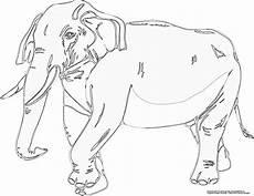 Ausmalbilder Elefant Gratis Elefant Gratis Ausmalbild