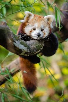 cutest baby animals in the world the mysterious world