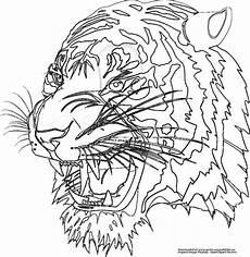 Malvorlagen Tiger Tiger Gratis Ausmalbild