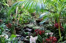 cymbidium orchideen pflege orchideenpflege richtig gemacht tipps vom profi der