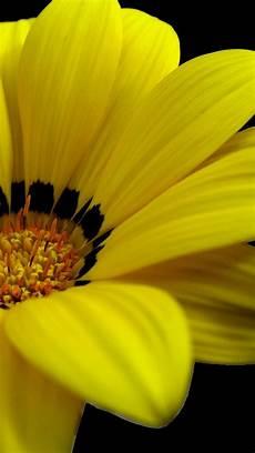 yellow flower wallpaper iphone yellow flowers iphone 6 plus wallpaper 14146 flowers