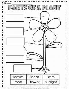 slide2 jpg 816 215 1 056 pixels plants worksheets parts of a plant kindergarten science