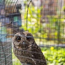 Eulen Malvorlagen Jogja Vogelmarkt Stock Fotos Laden Sie 314 Royalty Free Fotos