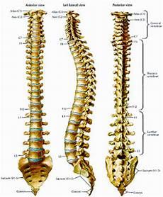 Tulang Belakang Spine