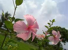 Flower Wallpaper Photo by Wallpapers Free Flowers Wallpaper