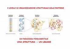 dispense biochimica dispensa la struttura delle proteine docsity