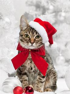 selected christmas excellent cakes merry christmas latest cat happy new year picture gallery2