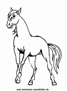 ausmalbilder pferd 13 tiere zum ausmalen malvorlagen