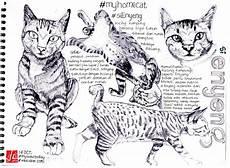 Mewarnai Sketsa Gambar Kucing Duduk Terbaru Kataucap
