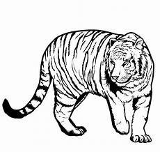 tiger coloring pages free on clipartmag