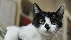 darf vermieter katze verbieten mietrecht vermieter darf katzen in der wohnung nicht