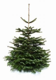 nordmanntanne kaufen weihnachtsbaumland 174