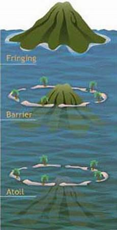 how do coral reefs form corals noaa s national ocean service education