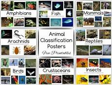 introduction to zoology for early elementary students