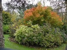 arbre pour petit jardin des arbres pour petits jardins arrosoirs et s 233 cateurs