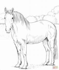 Ausmalbilder Pferde Supercoloring Ausmalbild Irisches Zugpferd Ausmalbilder Kostenlos Zum