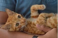 Si Fish Kucing Jalanan Yang Ditangkap Dan Kemudian Dijual