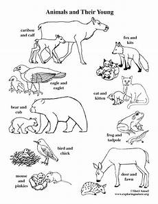 coloring pages of farm animals and their babies 17449 animals and their coloring page