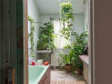 Bathroom Ideas Plants by The Plants That Will Thrive Not Die In Your Bathroom In
