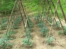 come seminare i pomodori in vaso orto e cultura aprile 2014