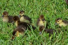 baby animals wild4creatures