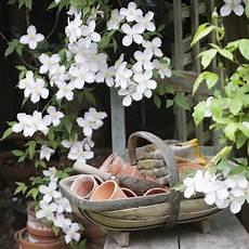 plantes grimpantes 224 croissance rapide jardin plante