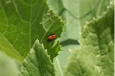 identifying common garden pests winwinfarm com