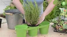 welche kräuter zusammen pflanzen kr 228 utergarten topf home ideen
