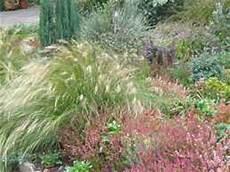 gräser im steingarten garten gr 228 ser pflanze wald gr 228 ser schatten ziergras