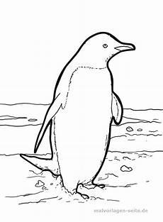 Malvorlage Pinguin Einfach Malvorlage Pinguin Gratis Malvorlagen Zum