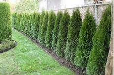Tout Savoir 224 Propos Des Plantations D Arbustes Pour Une