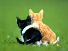 Foto Profil Wa Gambar Kucing Moa Gambar
