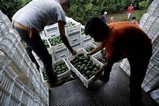 mexican cartels used government data to kidnap and extort avocado farmers