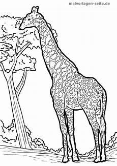 Malvorlagen Giraffen Gratis Malvorlage Giraffe Tiere Kostenlose Ausmalbilder
