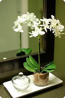 fausse plante salle de bain potted orchid like the glass vase deco