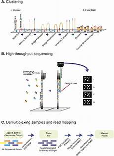 illumina ngs sequencing illumina sequencing and data processing workflow a