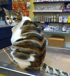 the little big cats animal haircuts craze sees pets turned into predators but is it cruel