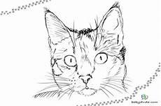 Malvorlagen Katzenkopf Malvorlage Katzenkopf Kostenlos Malbild