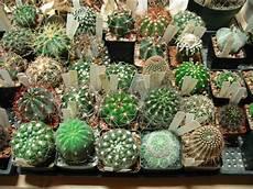 Der Kleine Grüne Kaktus - verschiedene kakteen arten f 252 r ihr zuhause