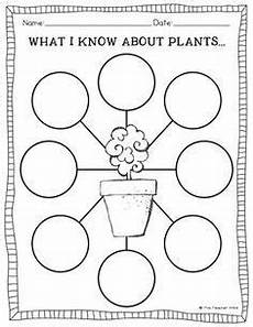 types of plants worksheets for grade 2 13744 worksheet on types of plants for grade 2 search plant activities plant science