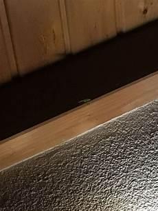 kleine gr 252 ne heuschrecke im zimmer wie entfernen insekten