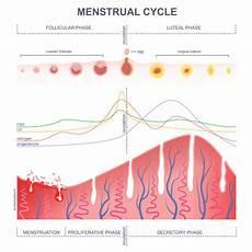 Zervixschleim Nach Einnistung - ovulation questions american pregnancy association