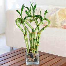 low light indoor plants you can decorate with