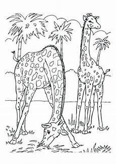 Malvorlagen Giraffen Gratis Pin Auf Giraffe