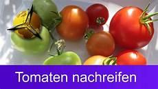 Unreife Gr 252 Ne Tomaten Nachreifen Lassen